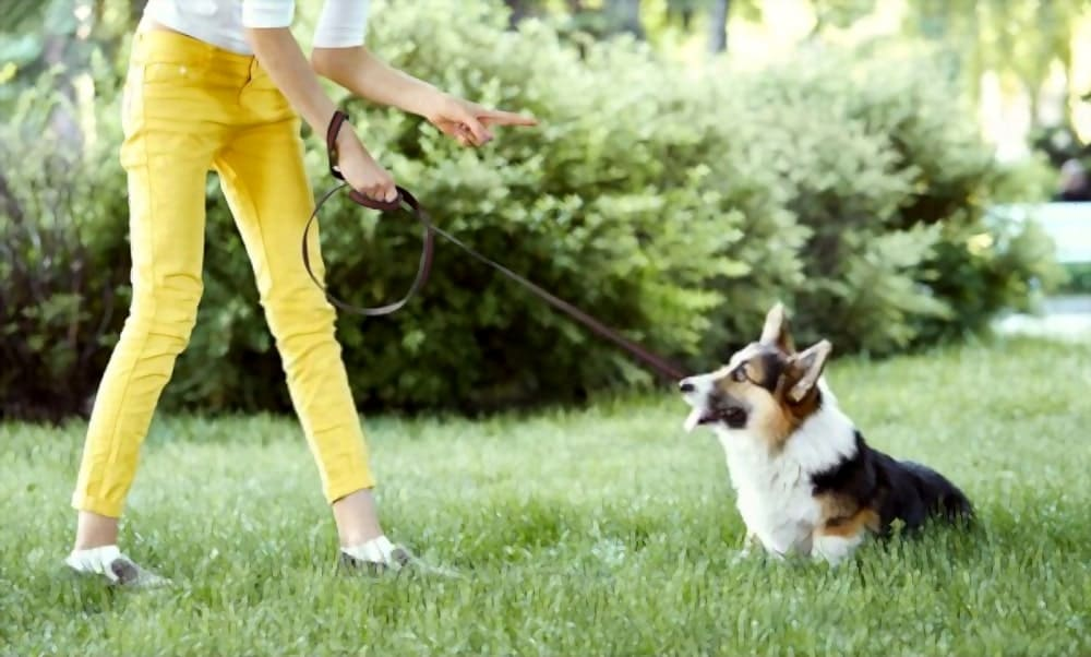Young female training puppy in park on grass
