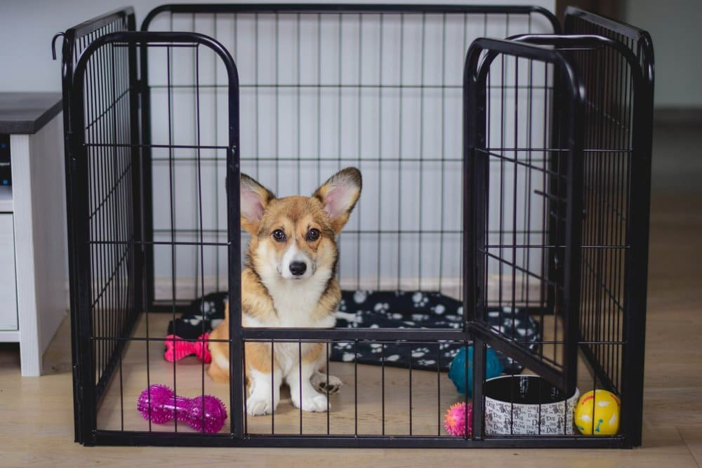Crate size for Corgi